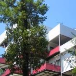 Пансионат Лад для отдыха в Макопсе